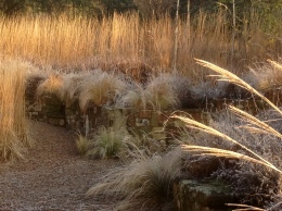 Eragrostis in January