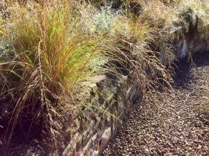 Wall pockets Eragrostis curvula