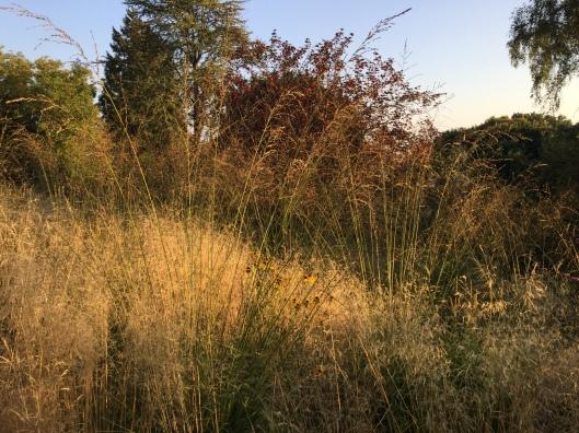 Molina Meadow November