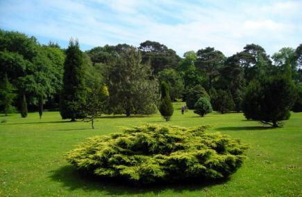 Pinetum park summer website image