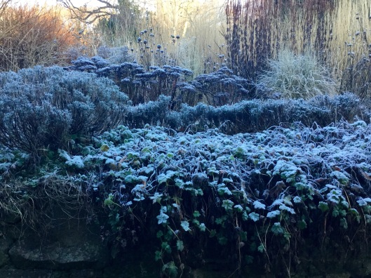 View of frosted planting from back door