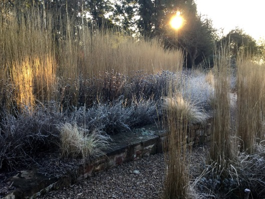 Sunrise grasses terrace in frost