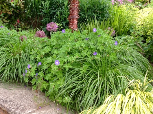 Pennisteum and alliums