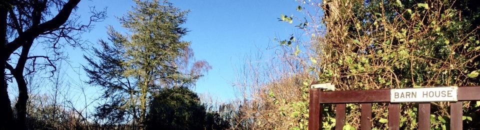 Cedrus atlantica Glauca - blue cedar barn house garden