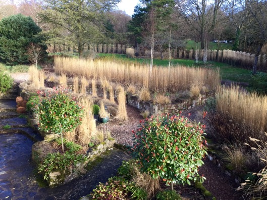 Grasses terrace February 2nd 2016