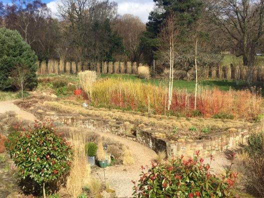 Grasses terrace 2016 minus cedar