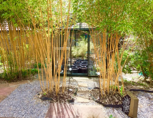Greenhouse and bamboos April 2016