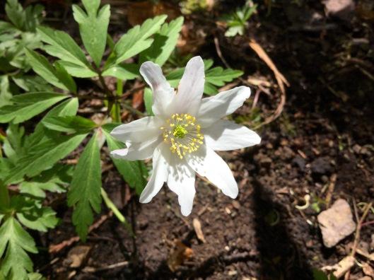 Nine petals