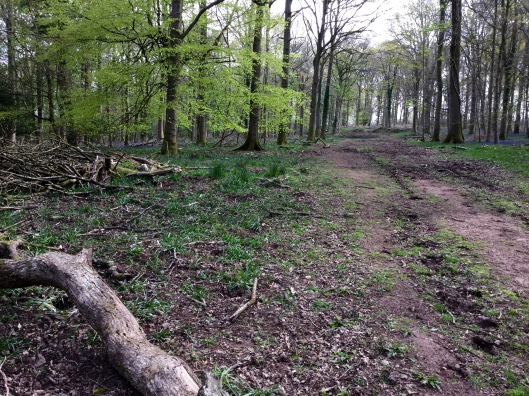 Bridleway in the bluebell wood