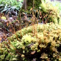 Moss bluebell woods