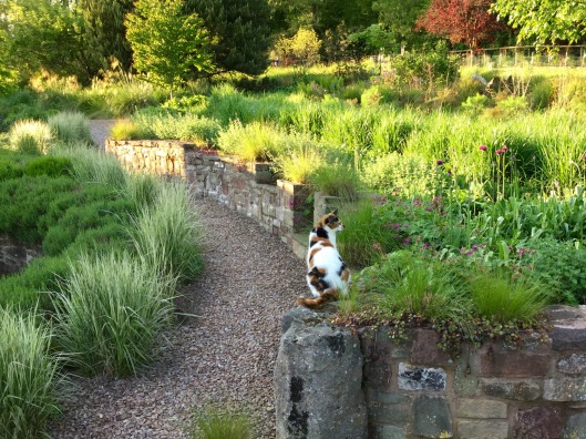 Mia surveying the terraces in late May