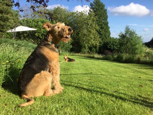 Poppy enjoying the sunshine late June