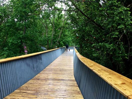 Westonbirt Treetop walkway