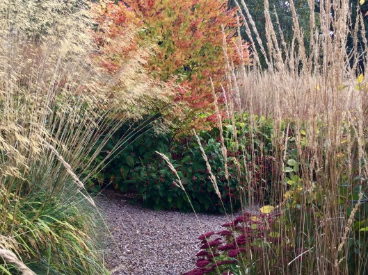 Stipa and cercidiphyllum