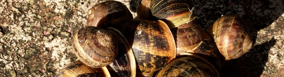 Cluster of snails