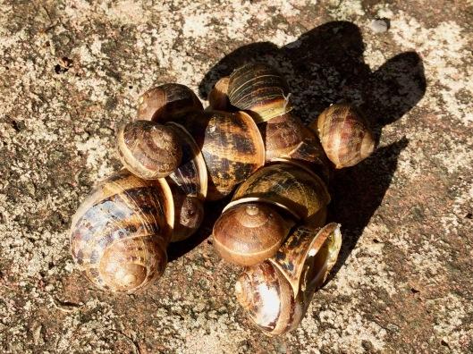 Cluster of snails on door