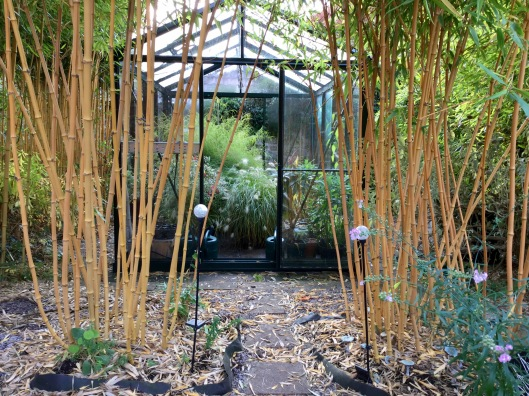 Greenhouse and bamboos, blue mushrooms.