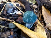 Blue Roundhead mushroom covered in slime