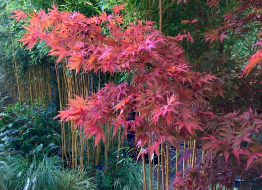 Acer and bamboo