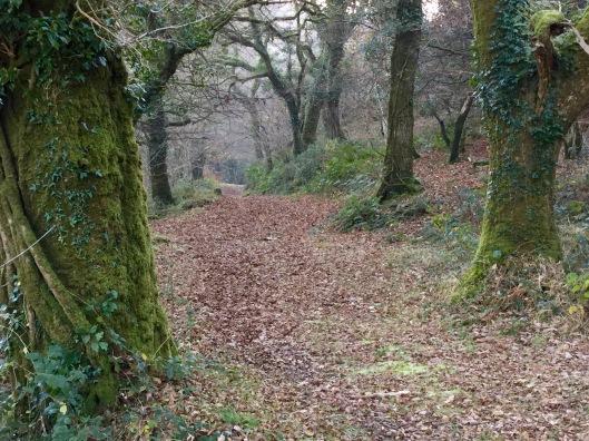 Oak woodland.