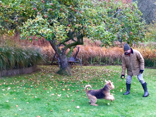 Poppy playing fetch with an apple