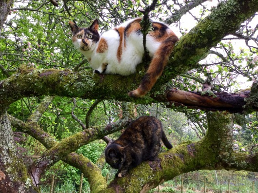Cats in the apple tree