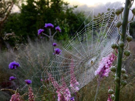 A misted spider's web