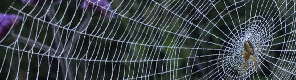 A misted spiders web